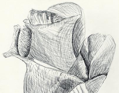Rose in Graphic Pen