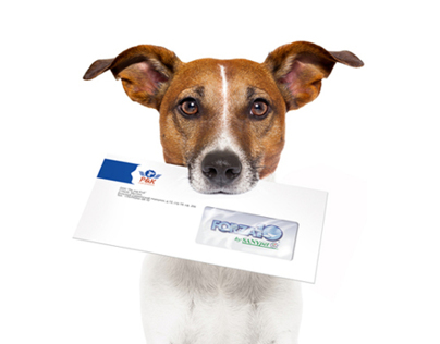 Dog food suppliers branding & corporate identity