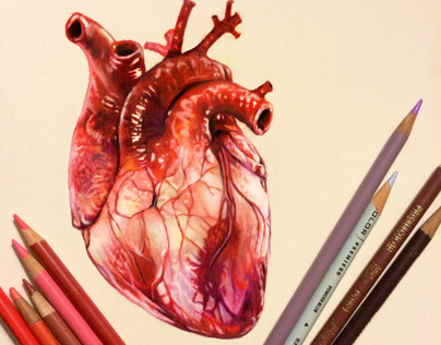 Colored Pencil Heart Study