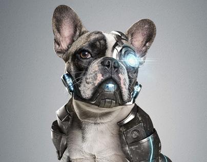 Cyber Dog l StudioNuts