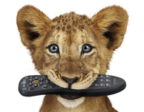 TELUS Lion Cubs – Retouching