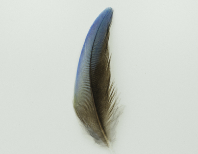 Australian feather studies 2
