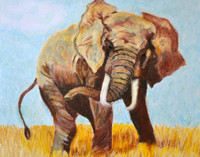African Wildlife drawings