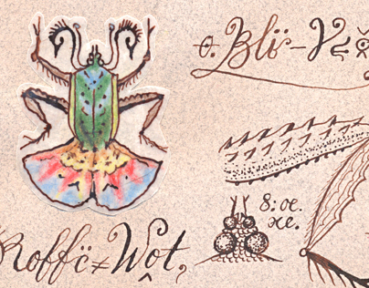 macro bestiarium illustrations & caligraphy