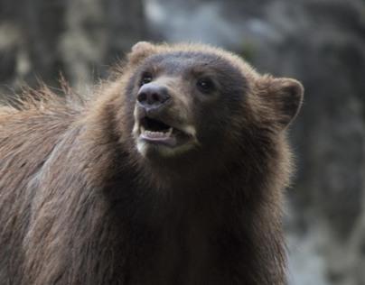 Houston Zoo Photography