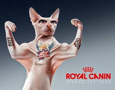 Royal Canin : semper fi Behance collaboration n° 6