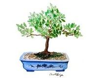 Bonsai Trees Watercolors and Ink