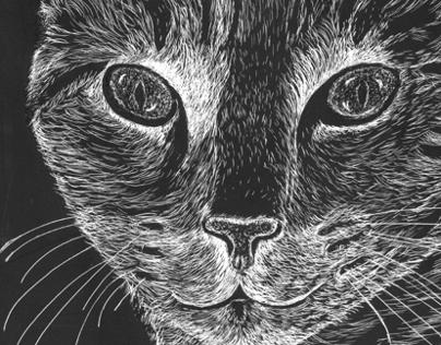 Cat drawn on scratchboard