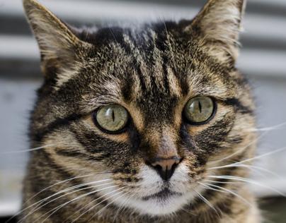 Lütfü Cat in Beyoglu