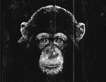 Polaroid Animal Portraits