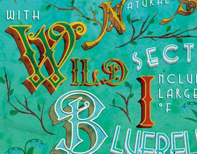 Bluebells Typography
