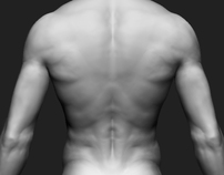 Modelling - Male Body