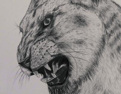 Realism Drawing - Lion