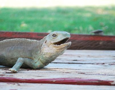 Lizard Photo Shoot