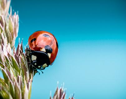 ° the ladybug °