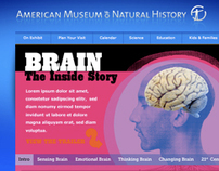 American Museum of Natural History / Brain