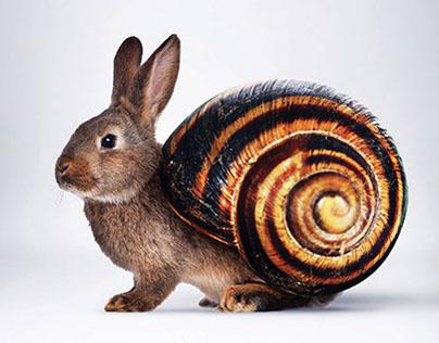 Aramex Snail Express