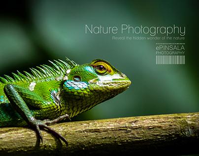 Nature Photography part 2