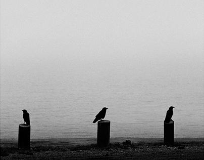 short stories in black and white (V)