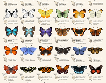 An animated chart of 42 butterflies