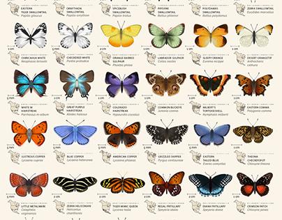 An animated chart of 42 butterflies