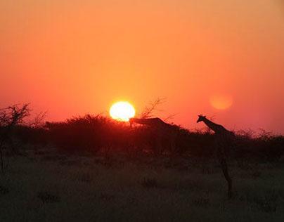New African Frontiers Website