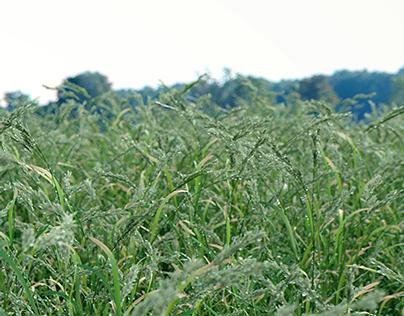 VIZPARK Real Grass - MODO version
