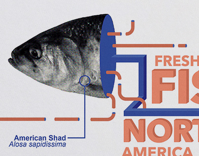 Freshwater Fish of North America
