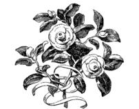 Trueheart Vineyard Petite Syrah