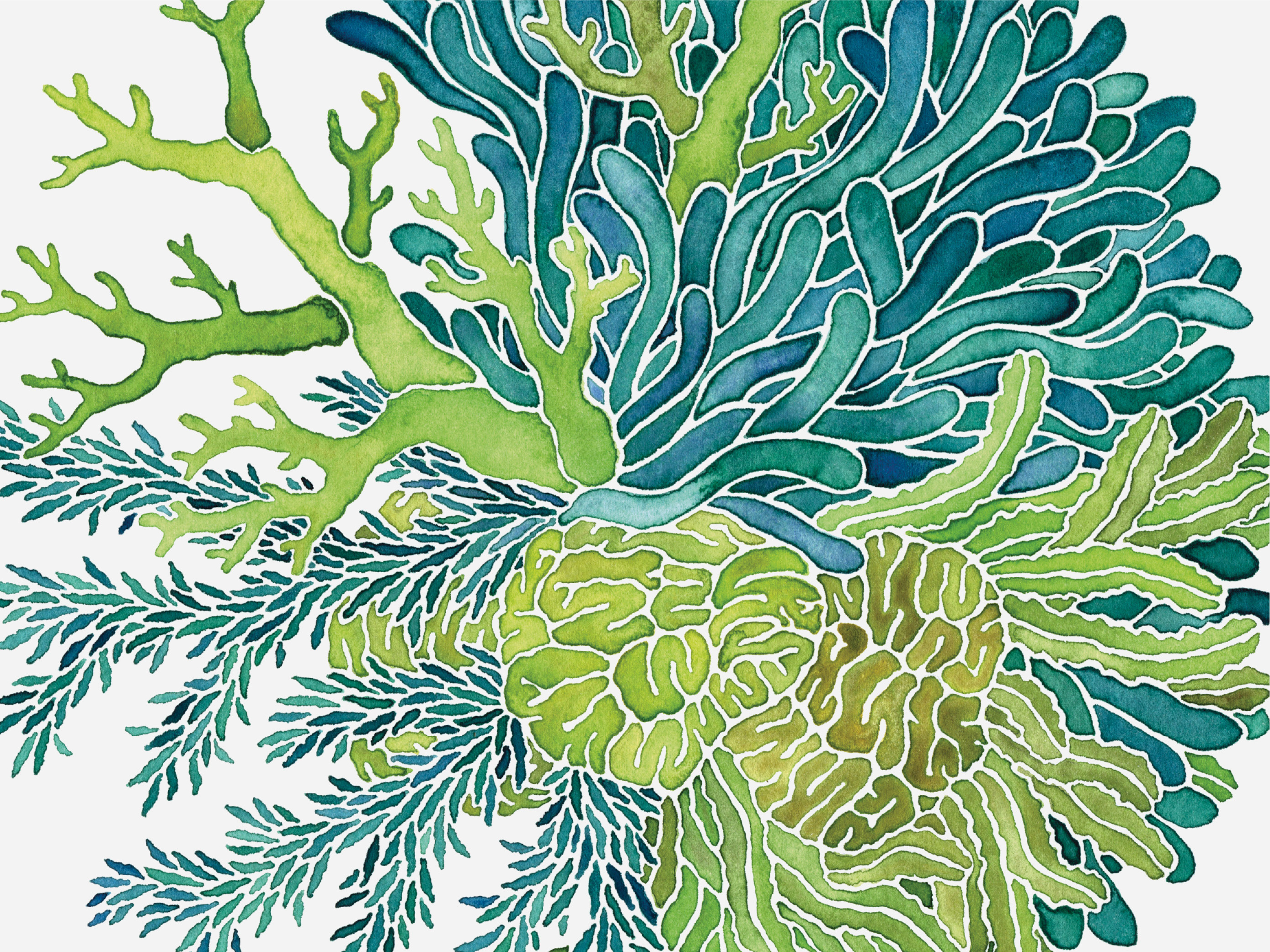 Watercolor Sea Plant Illustrations