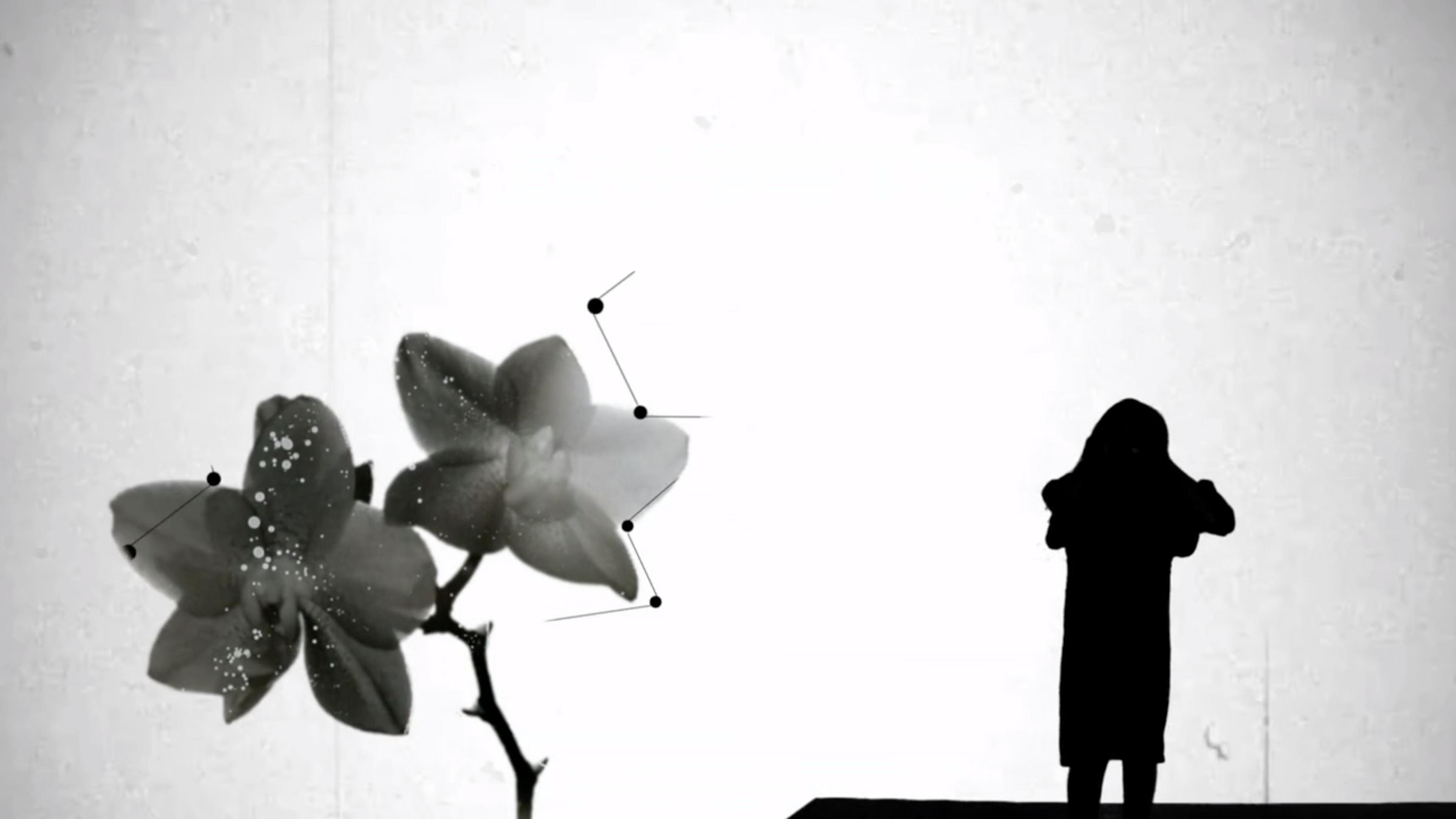 Yona Wallach | יונה וולך