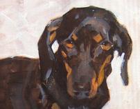 Retrato de animais / Pet Portraits