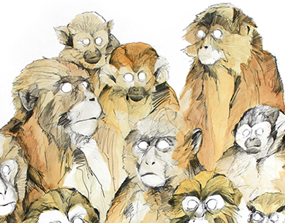 MONKEY DRAWINGS