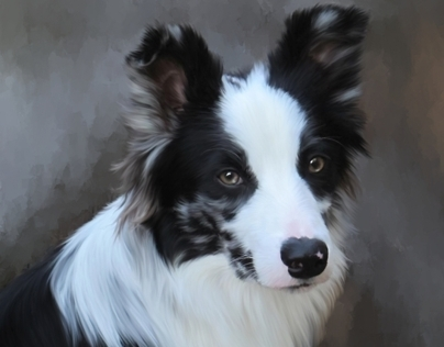 Flying Fur Pet Portraits