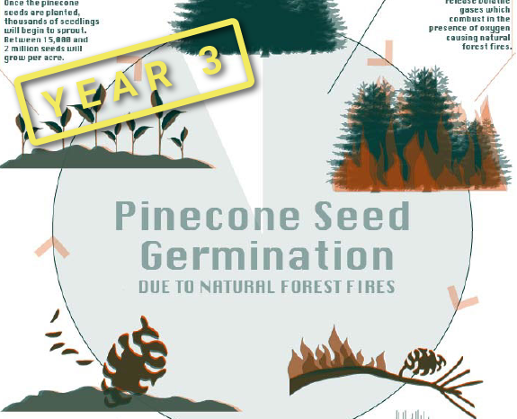 Pinecone Inforgraphic