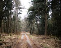 German Forest - Taunus