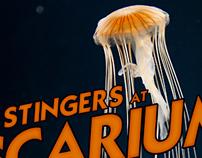 New York Aquarium's Annual Ascarium