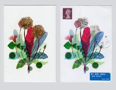 Dandelion Postcards