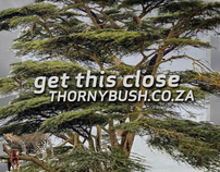 Thorny Bush - Get This Close