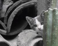 Photography - Ayacucho