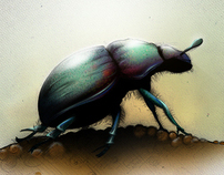 Beetle Photoshop