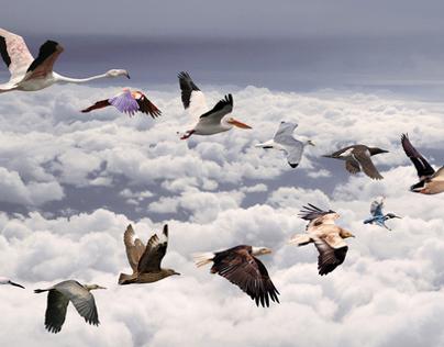 Pájaros / Iberia Airlines / Outdoor