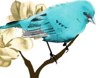 Bird Rapport Pattern