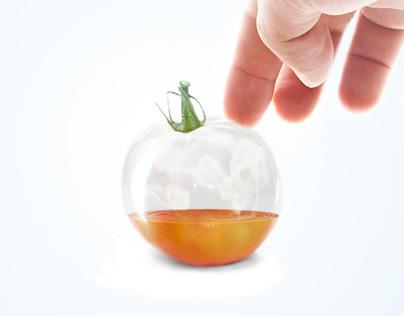 Hand picked tomato