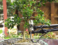 Music from a Bonsai