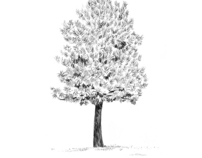 Dibujos de árboles / Drawings of trees