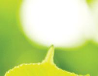 BCBSNC's green building: csc2 brochure