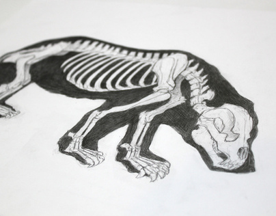 Animal Anatomy Illustrations