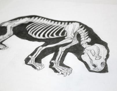Animal Anatomy Illustrations
