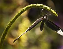 Butterflies I Mariposas